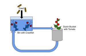 Aquaponics Mini System Diagram